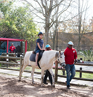Horse Rides - Rides at Bugz Family Playpark