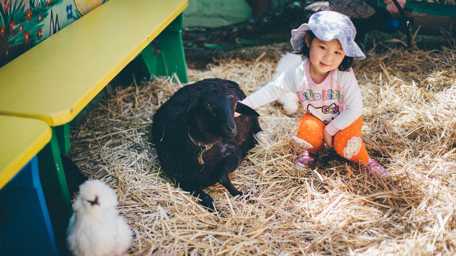 Bugz Playpark | Park & Rides | Petting Farm